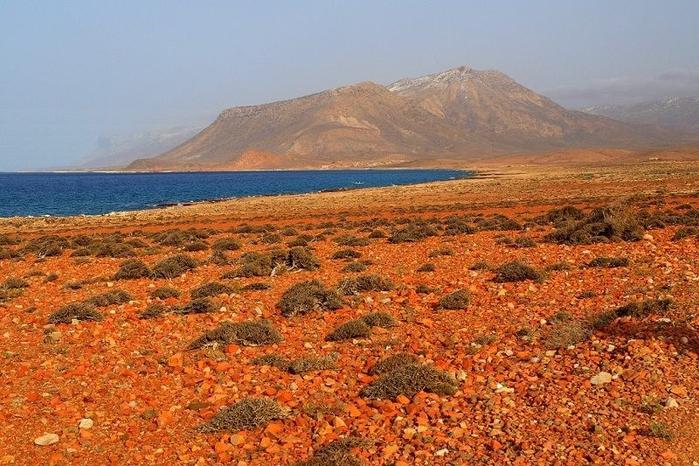 Socotra17 (700x466, 299Kb)