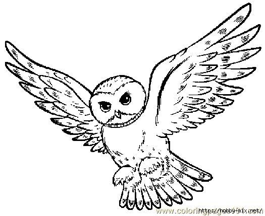 Раскраска картинки сова