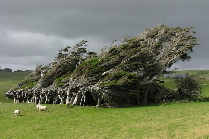 красивые деревья фото (680x453, 233Kb)