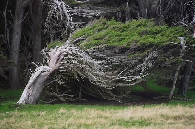 красивые деревья фото 4 (680x450, 266Kb)
