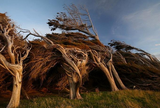 красивые деревья фото 5 (680x460, 274Kb)