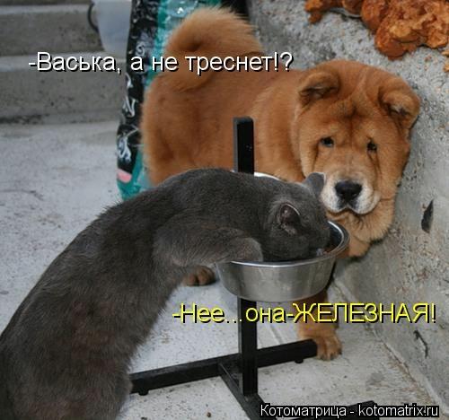 kotomatritsa_1 (500x468, 103Kb)