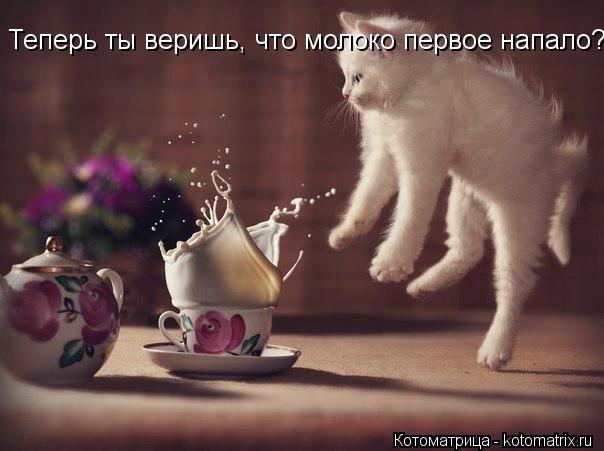 kotomatritsa_et (604x451, 97Kb)