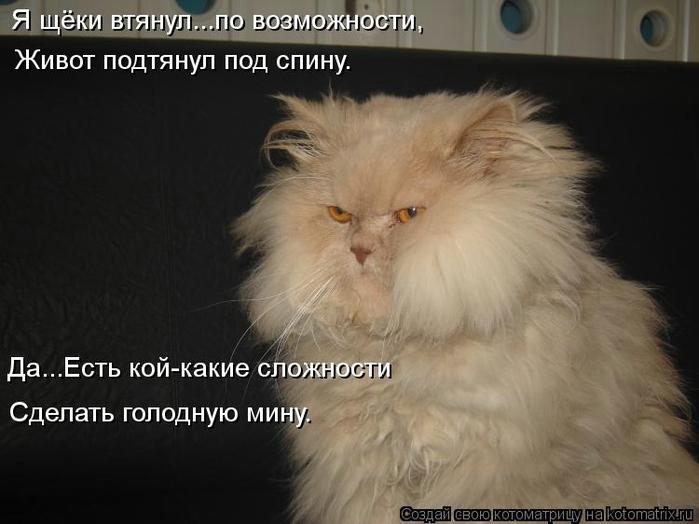kotomatritsa_KC (700x524, 183Kb)
