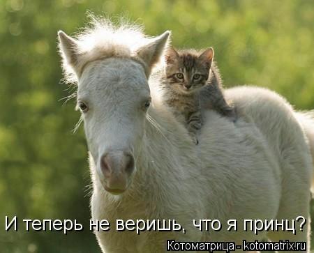 kotomatritsa_mJ (450x363, 63Kb)