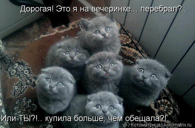 kotomatritsa_W (640x423, 129Kb)