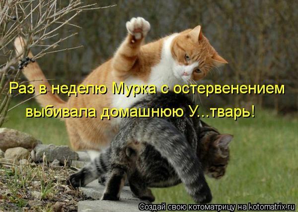 kotomatritsa_Xq (600x427, 139Kb)