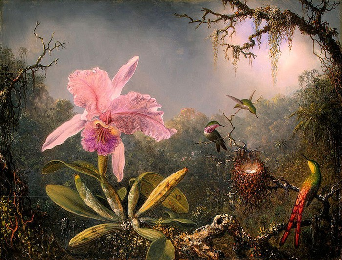 Martin-Johnson-Heade_oiseaux-tropicaux (700x532, 158Kb)