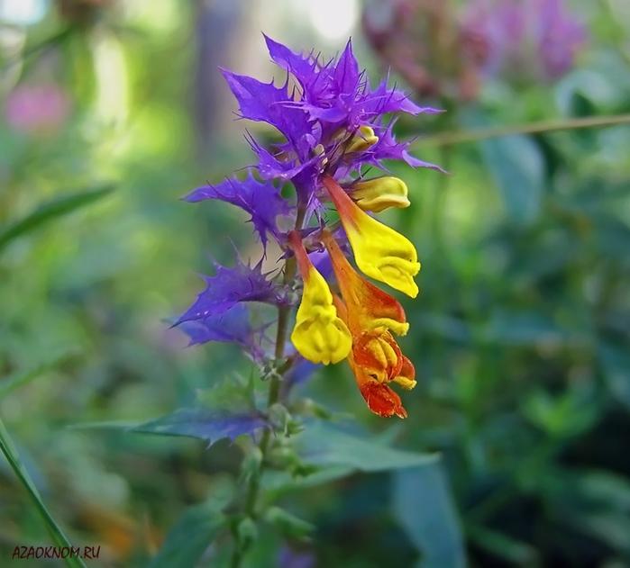 Цветок_005_650 (700x631, 231Kb)