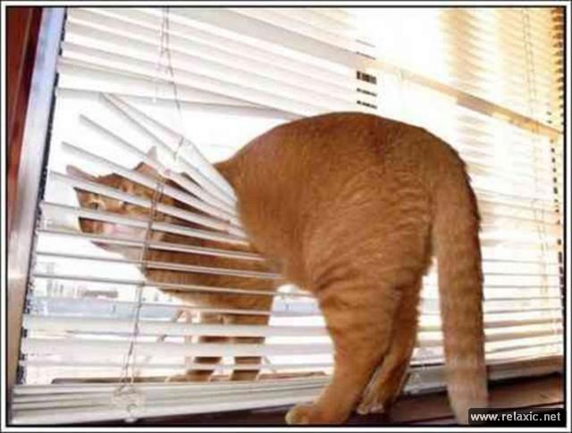 cats-vs-blinds_00017 (640x485, 221Kb)