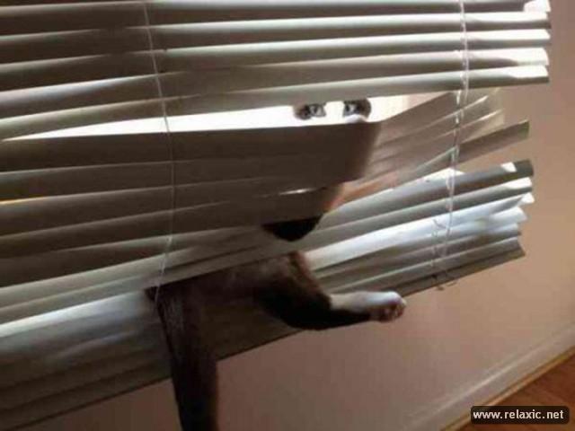 cats-vs-blinds_00019 (640x480, 163Kb)