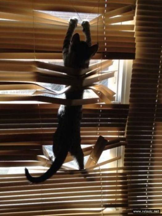 cats-vs-blinds_00021 (525x700,