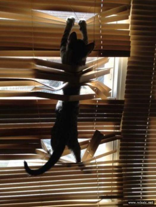 cats-vs-blinds_00021 (525x700,