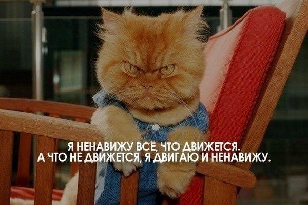 http://img1.liveinternet.ru/images/attach/c/9/105/668/105668237_YAnenavizhuvsyochtodvizhetsyaAvsyochtonedvizhetsyayadvigayuinenavizhu.jpg
