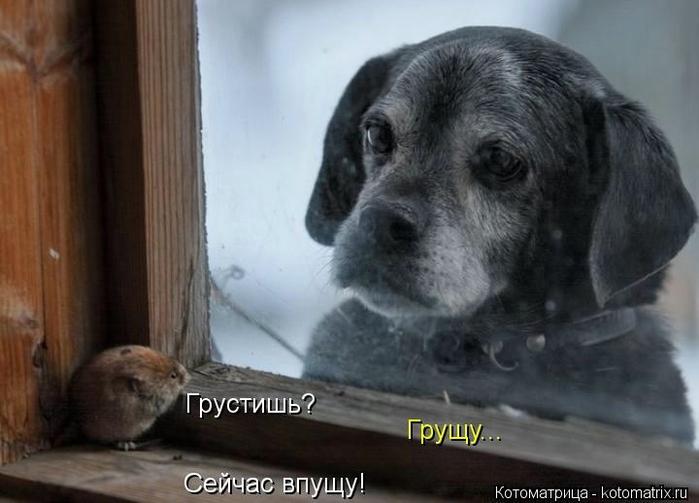 kotomatritsa_gM (700x503, 182Kb)