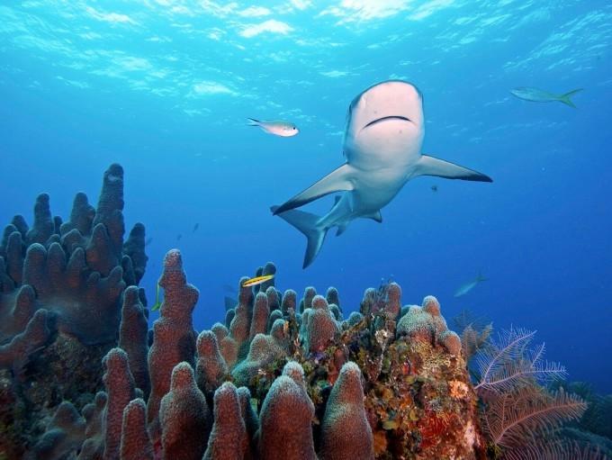 акула фото 1 (680x511, 177Kb)