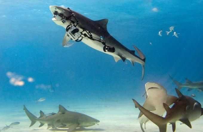 акула фото 3 (680x443, 129Kb)
