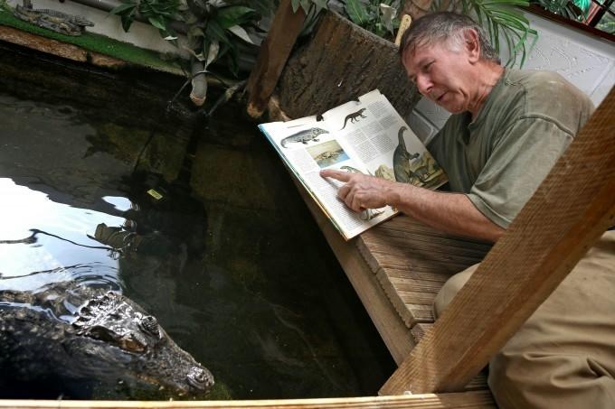 крокодил фото (680x453, 164Kb)