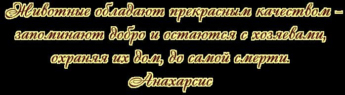 5145824_Bez_imeni_2_ (700x192, 101Kb)