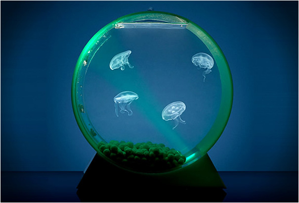 creative_aquariums_20_1-s605x410-322361 (605x410, 136Kb)