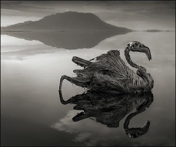 озеро натрон Nick Brandt 5 (570x477, 115Kb)