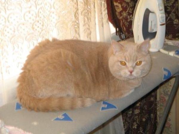 cat_barb (600x450, 33Kb)