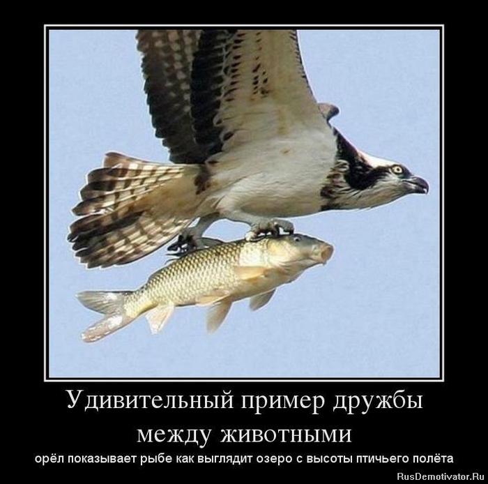 1367946206_90271594_udivitelnyij-primer-druzhbyi-mezhdu-zhivotnyimi (700x694, 213Kb)