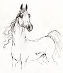 Превью arabian-horse-drawing-19-angel-tarantella (601x700, 261Kb)