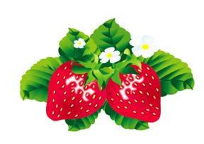 5405261_1270297734strawberry2 (288x203, 9Kb)