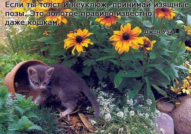1381128546_www.radionetplus.ru-10 (622x435, 239Kb)