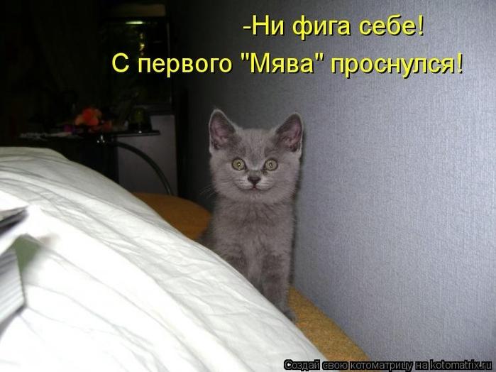 kotomatritsa_5s (700x524, 204Kb)