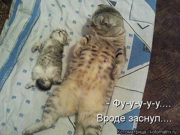 kotomatritsa_7n (604x453, 151Kb)