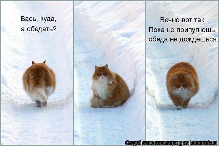 kotomatritsa_bb (700x466, 212Kb)