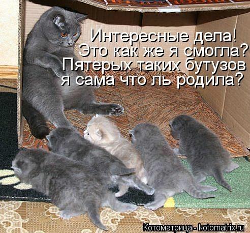 kotomatritsa_id (492x458, 160Kb)