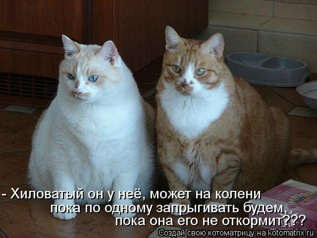 kotomatritsa_M (640x480, 132Kb)