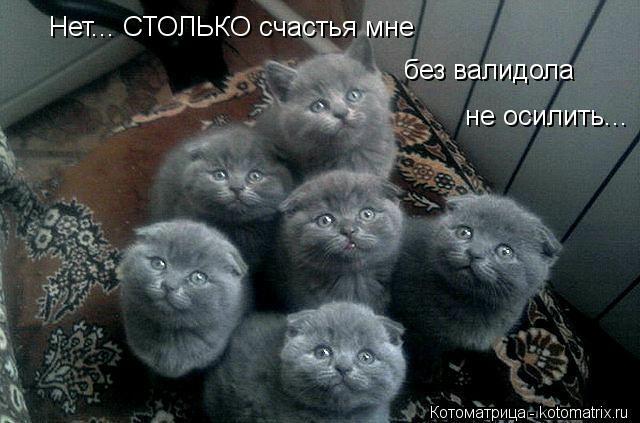 kotomatritsa_q8 (640x423, 123Kb)