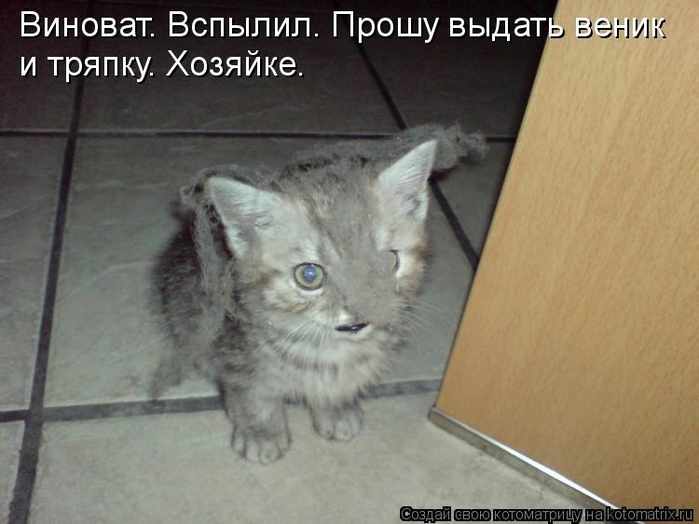 kotomatritsa_v (700x524, 212Kb)