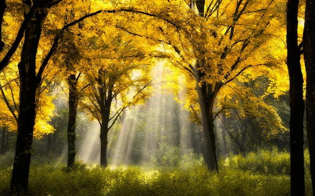 Sun_rays_002 (637x397, 374Kb)