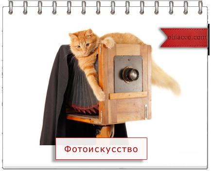 Редактор фото со смайликами из вк онлайн - 36215
