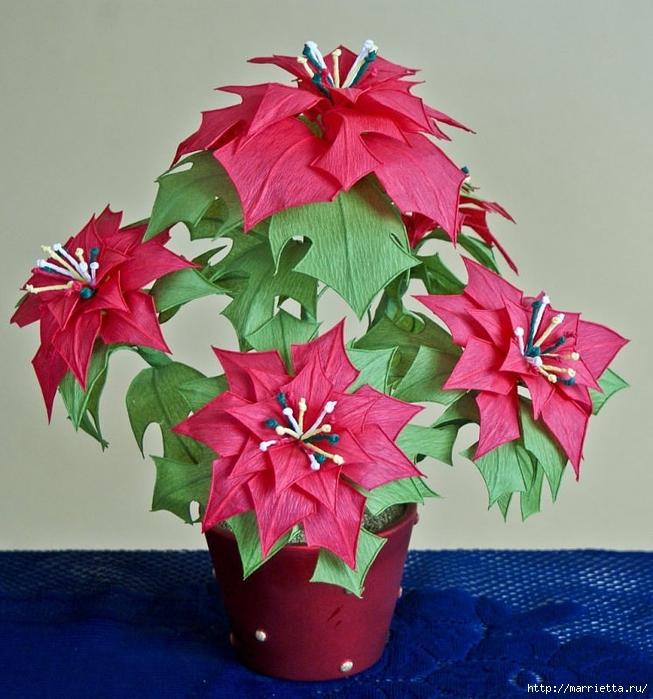 Рождественская звезда ПУАНСЕТТИЯ из гофрированной бумаги (40) (653x700, 311Kb)