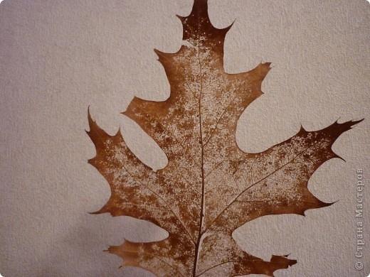 скелетирование осеннего листа (6) (520x390, 148Kb)