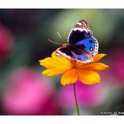 Бабочка1 (250x250, 28Kb)