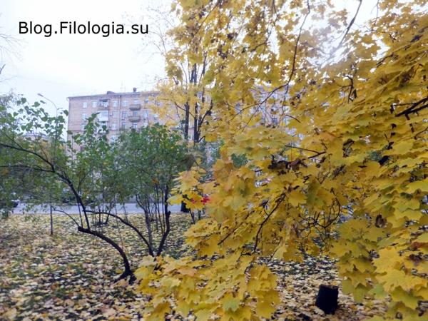 Осенние листья/3241858_osen (600x450, 254Kb)