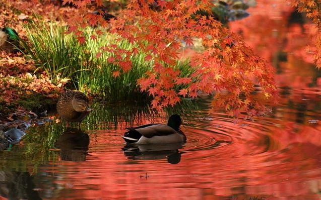 Japanese-garden_001 (637x398, 322Kb)