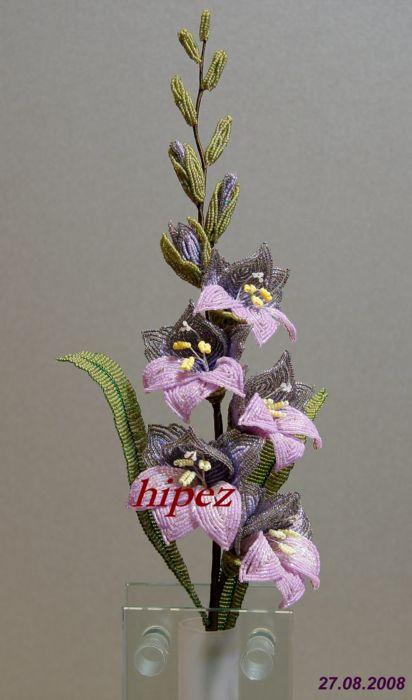 gladiolus (412x700, 41Kb)
