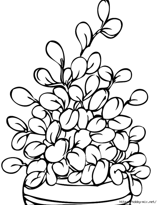 Plants-Coloring-Page1 (540x700, 176Kb)