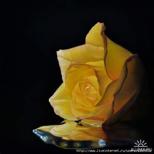 1381666169_yellow_rose_1_by_deraat-d4tqlws (500x500, 57Kb)