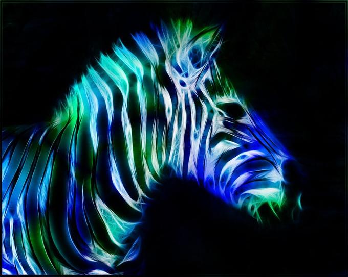 Fractal_Zebra_by_minimoo64 (680x543, 248Kb)