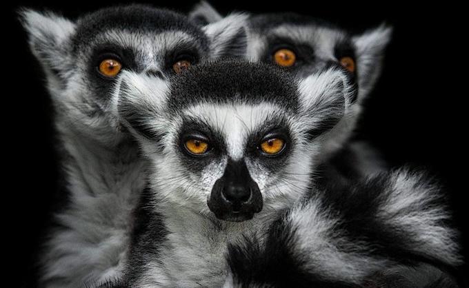 портреты животных фото 3 (680x418, 152Kb)
