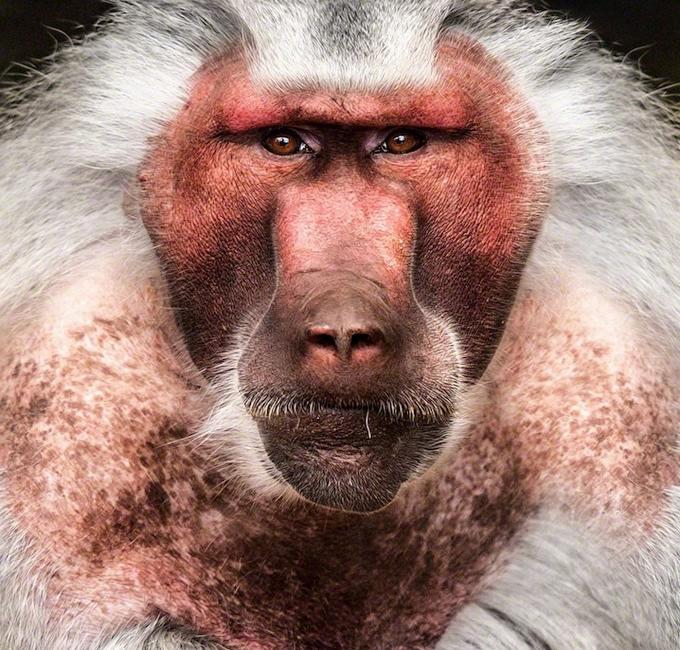 портреты животных фото 6 (680x650, 379Kb)
